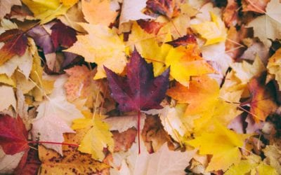 Where to Capture the Best Fall Colours