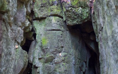 Duncan Caves