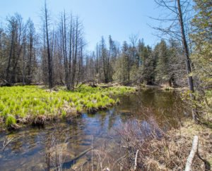 Lot for Sale in Grey County